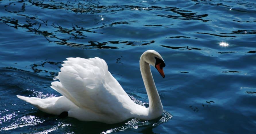 Royal Swan da Ainsworth Gaming: uma revisão completa